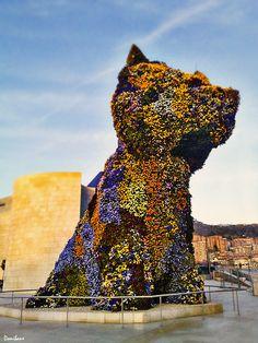 Basque Country, Bizkaia, Bilbao, Puppy (by Donibane)