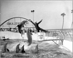 Marineland 1964