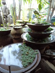 Balinese Garden Urns - Bali Sourced on Facebook and www.balisourced.com to see more.