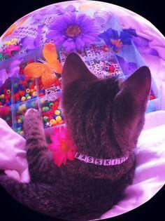 Everyone needs a Bass Kitty #kandi #cat #rave