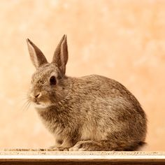 Save your veg garden from hungry Rabbits!Humane methods of keeping your Veggies, Herbs and other outdoor plants safe from their voracious appetites.