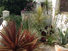 White themed front garden in Brighton, Sussex, with a bespoke recycling store and spiky exotic planting