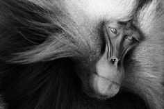In Focus - National Geographic Photo Contest 2011 - The Atlantic