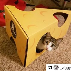 Silly Cats, Cute Cats, Ziggy Star, Cheese Wedge, Cats Of Instagram, Instagram Posts, Cat Toys, Toy Chest, Cute Animals
