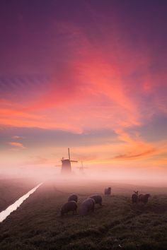 A foggy morning in Schermerhorn, Noord Holland, The Netherlands