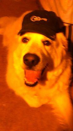 Mollys hat