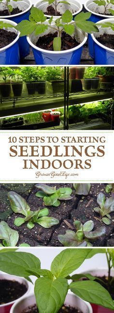 Growing your own garden transplants from seed offers you more flexibly and control over your vegetables, herbs, and fruit. You can choose your favorite varieties, grow the number of plants you need, and work within the planting dates that suit your growing area.