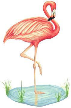 Pink+Flamingo+Tattoo+Designs | Details about Tatouage Pink Flamingo Dry Rub Transfer Mural