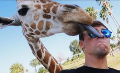 A giraffe licked my face!!! Check out my latest VLOG from Tampa on my channel now :) https://youtu.be/deWupejoueE @buschgardens