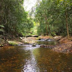 Got to love our office...#explorequeensland #thisismyparadise #thisisqueensland #australia #seeaustralia  #cairns #rainforest #nature #exploretnq #queensland #wettropics #worldheritage