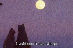 I would spend 9 lives with you...