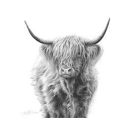 Farm Animals – Nolon Stacey – Highland Cow – … - Top Of The World Highland Cow Art, Highland Cattle, Highland Cow Tattoo, Highland Cow Painting, Cross Paintings, Animal Paintings, Animal Drawings, Drawing Animals, Farm Animals