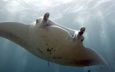 The Philippines Gets a Little Safer for Endangered Sharks and Rays | TakePart