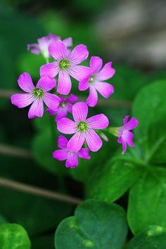 Beautiful Flowers Photos, Amazing Flowers, Beautiful Roses, Pretty Flowers, Botanical Flowers, Flowers Nature, Exotic Flowers, Flower Images, Flower Pictures