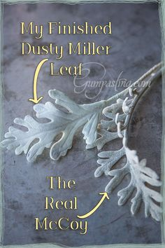 {My Finished Gumpaste Dusty Miller Leaf Next to a Real One}