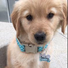 Stripe Teal and White Dog Collar Salt And Water, Dog Design, Labrador Retriever, Green Bean, Dogs, Fun, Animals, Vintage, Happy
