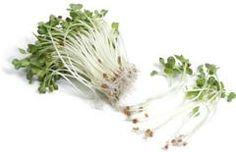 Csírák Herbs, Herb, Spice