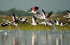 Visit to the Bharatpur Bird Sanctuary   Padhaaro