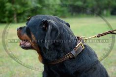 Walking and Training #Rottweiler #Leather #Collar with Braids $39.90