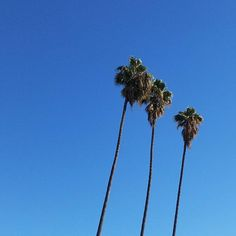 Blue skies on a windy winter day. Got our morning walk in a bit late but went extra long and enjoyed the sweaty exertion on a chilly day immensely  . #cali #californialove #calilove #la #losangeles #ingelwood #southside #palmtrees #blueskies #winter #cityscape #gorgeous #nofilter #healthyliving #morningwalk #exercise #healthymama #fitfam
