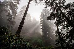 ITAP of a foggy morning http://ift.tt/2ixFNPI