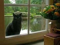 """"""" Hello In There---It's Raining Out Here!!"""""""