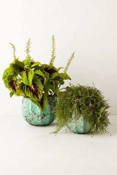 Wedding Gfit Idea: Plant something lovely in one of these Celadon Garden Pots from Anthropologie.com