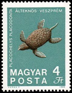 Fossilized Turtle (Placochelys placodonta) from Veszprém