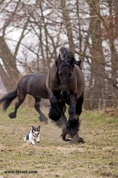 Horse and dog chase, lol.