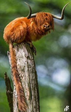 Scottish monkey by Dwarf4r.deviantart.com on @deviantART