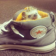 Hedgehog in a shoe…just another day on Wuvely!