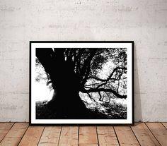 tree art print / black white art nature photography /  forest
