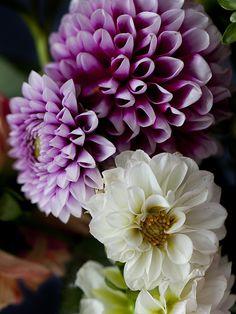 lingered upon: Grateful. http://lingeredupon.blogspot.co.uk/2012/10/grateful.html