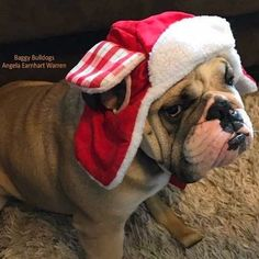 The major breeds of bulldogs are English bulldog, American bulldog, and French bulldog. The bulldog has a broad shoulder which matches with the head. Dog Training Methods, Basic Dog Training, Dog Training Techniques, Training Your Puppy, Training Dogs, Puppy Obedience Training, Positive Dog Training, Easiest Dogs To Train, Bulldog Puppies