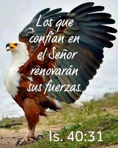 Christian Images, Biblical Quotes, Bald Eagle, Animals, Amazing, Good Morning Greetings, Be Nice, Strength, Good Morning