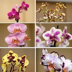Nice ORCHIDS. Flower Decorations, Table Decorations, Florists, Amazing Flowers, Orchids, Bouquet, Nice, Plants, Home Decor