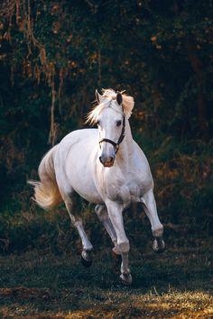 My Wallpapers - Source of iPhone & Android HD Wallpapers Beautiful Arabian Horses, Most Beautiful Horses, All The Pretty Horses, Animals Beautiful, Horse Wallpaper, Animal Wallpaper, Mobile Wallpaper, Iphone Wallpaper, Cute Horses