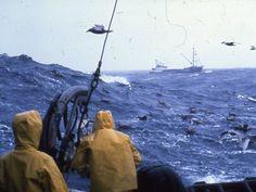 Bering Sea pictures | Crews fish for king crab in the Bering Sea, Alaska. Credit: William ...
