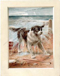 Newfoundland Dog Paris Wine Merchant Chromo Trade Card c1900s  | eBay