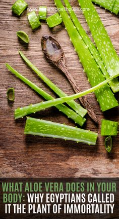 Before we start with this article, I would like to ask you a simple question – do you have aloe vera plant in your home? This plant has become extremely popular in American homes and many people around the world have aloe vera plant in their homes. Natural Health Remedies, Natural Cures, Herbal Remedies, Home Remedies, Natural Healing, Natural Oil, Herbal Tea, Natural Medicine, Tips