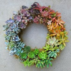 "Feeling lucky today to discover the most beautiful wreath of succulents. # #Repost @jenssuccs  The Jen's Succs Original Rainbow Wreath! (You guys realize my account name isn't actually ""Jen Succs right??) This pic has been reposted so much that you've all probably seen it before but I'm celebrating my 1 year succu-versary so I'll repost myself if I want to!  (I actually saw it recently on FB and the girl who posted it found it on Tumblr I think!) This baby gets around!  #jenssuccs…"