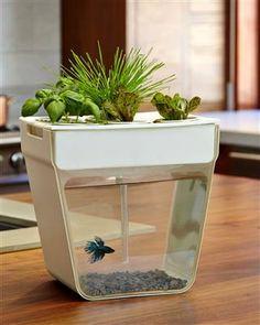 Home Aquaponics: een zelfreinigende vissenkom waar je planten zoals kruiden in kunt kweken - lees meer op www.fruitofthecity.com