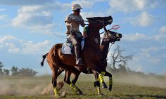 All the top men Polocrosse players came to Antelope Park for a social gathering. A weekend with a lot of speed and adrenalin! Horses, Park, Cool Stuff, Top, Animals, Animales, Animaux, Horse, Parks