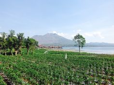View of Lake and Mount Batur