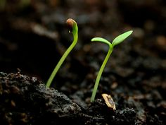 seedlings--14 tips for starting your own seeds