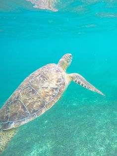 Swimming with sea turtles in Akumal, Mexico