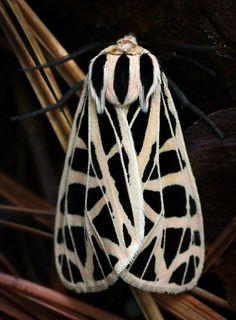 "Онлайн психолог домашних питомцев - animal psychology https://www.facebook.com/animal.psychology Психолог онлайн. ""Психология личного пространства"" http://psychologieshomo.ru   Tiger Moth"