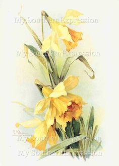 Catherine Klein Daffodil Painting Vintage by MySouthernExpression