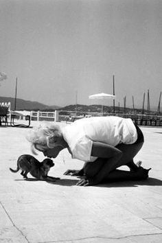 This is not Marilyn Monroe   This is Jayne Mansfield   Some say (this is a contentious topic) Jayne Mansfield admired and styled herself after Marilyn, so she would likely be flattered that this photo of her at the 1964 Cannes film festival with one of her beloved chihuahuas has recently been mistaken as being Marilyn.