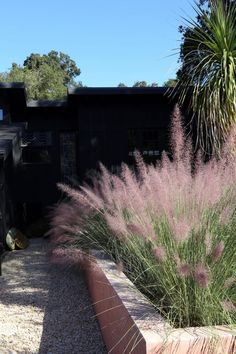 Artist Carly Jo Morgan used pink concrete to turn an over-watered cottage garden into a drought-tolerant landscape in Topanga Canyon outside of Los Angeles.